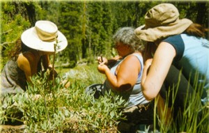 Karyn planting in the wild with students. Photo by Inbar Sarig.