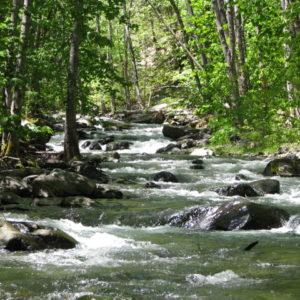 Shakleford Creek